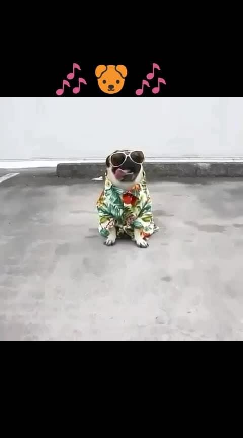 #dogs #loverofdogs #despacitolover