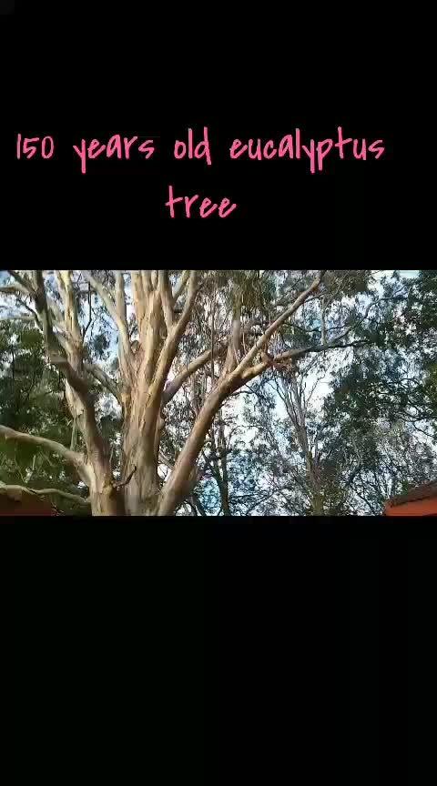 #horsleyhills #hillstations 150 year old tree