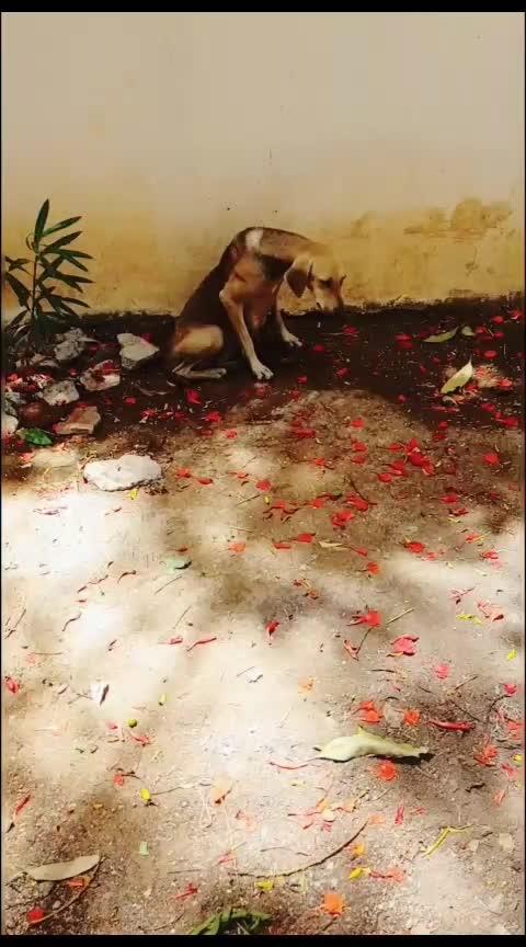 love all 🐾💕❣️🐕🐶 . . #dog #dogs #doggie #doggystyle #doglife  #saravanasudan      #saravana_sudan       #tamiltrending     #roposo     #ropo-love     #ropo-good     #ropo-beauty     #ropo-style   #ropo-style    #outdoor    #roposogal    #tv    #haha-tv    #tvbythepeople    #tvbythepeole    #beats    #roposo_beats  #haha-tv #haha #ropostars #adharva #gemini #geminiganesanumsurulirajanum #geminimovie  #ropostar #tamil #tamilcomedy #love #loveness #proposal