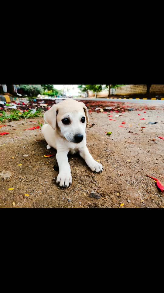 #cute #puppies #love