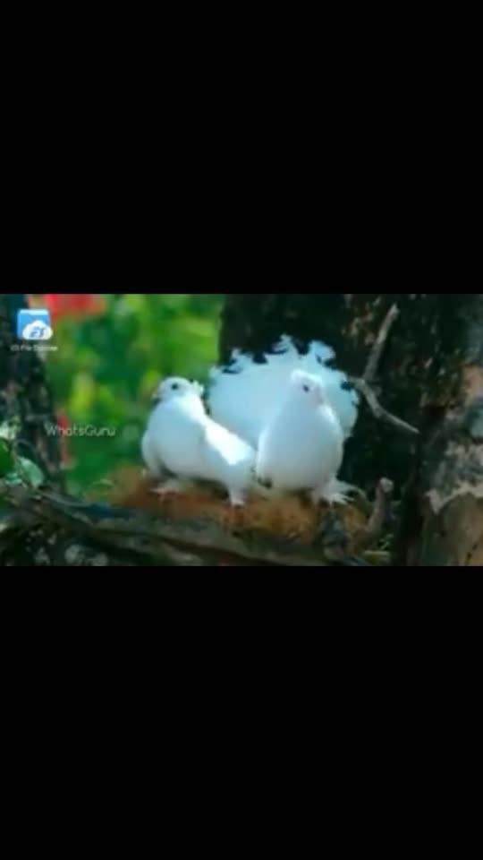 #love birds