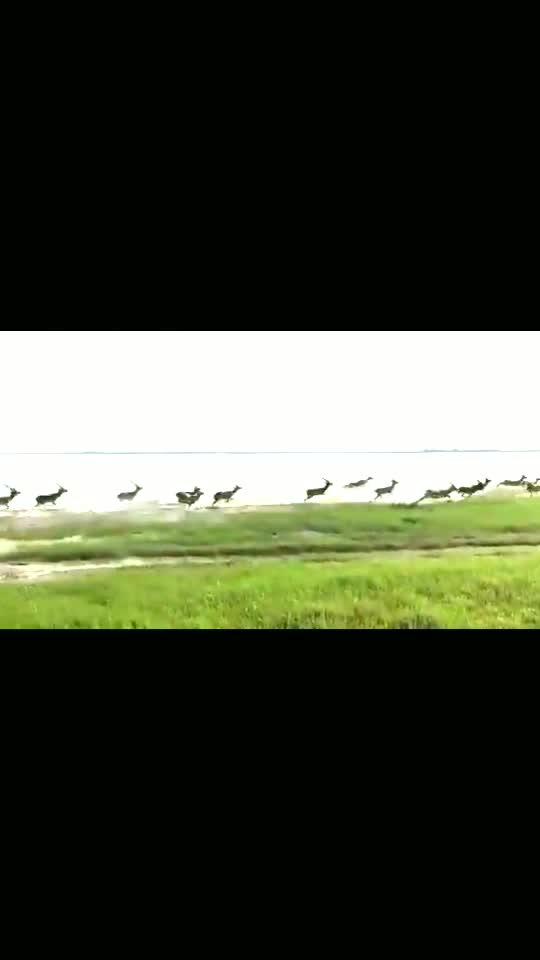 #scince #amazingvideo #5minutecrafts #technology #futurethisvedio #funnyvideo #likeforlike #maheshbabufans