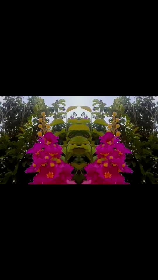#flower #pattampoochi
