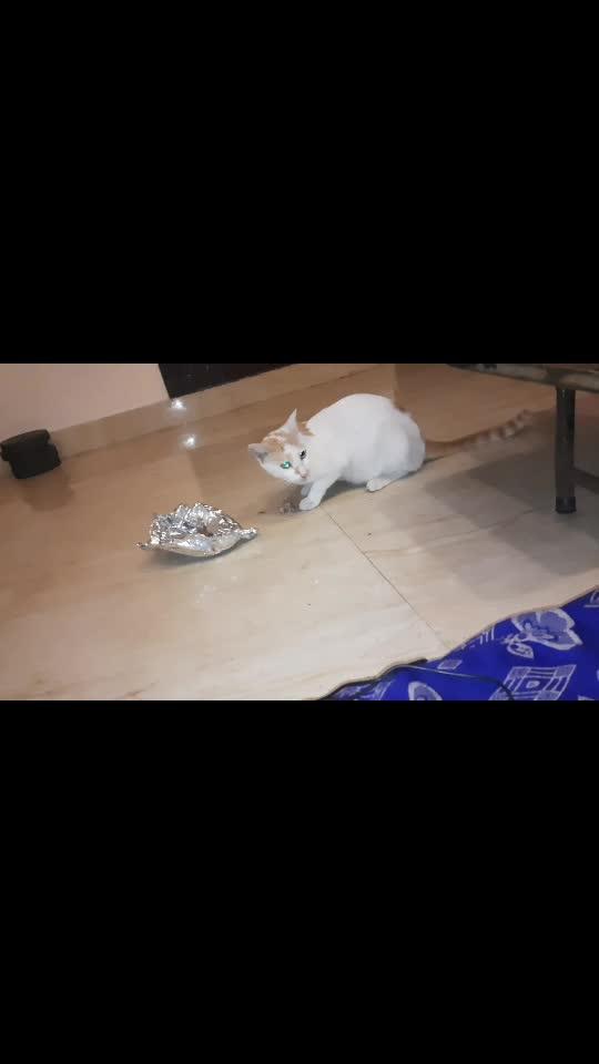 my sweet kitty#kitty ,cat