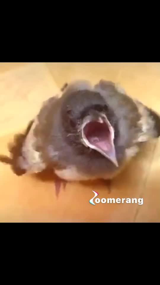 #saved this bird