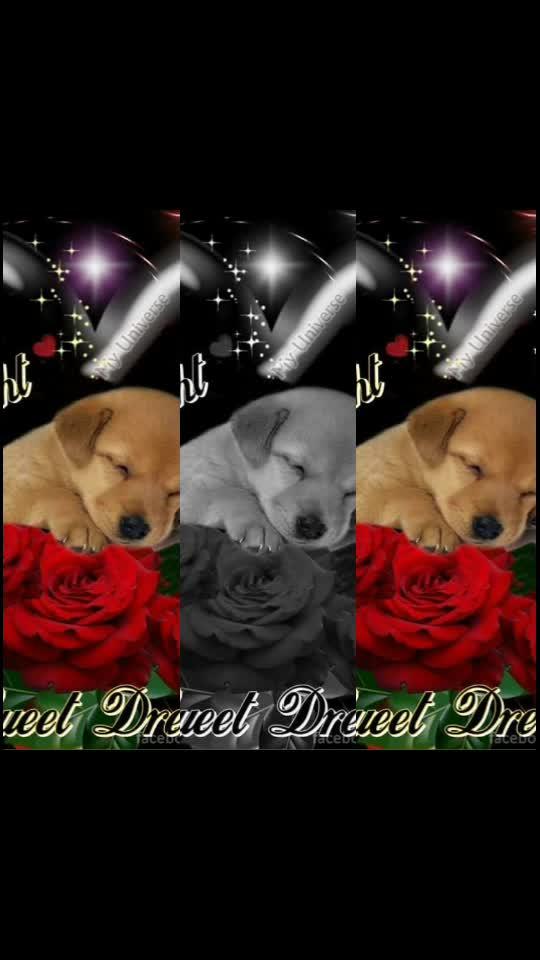 #goodnight #goodnight-wishes #goodnightsweetdreams #goodnightfriends
