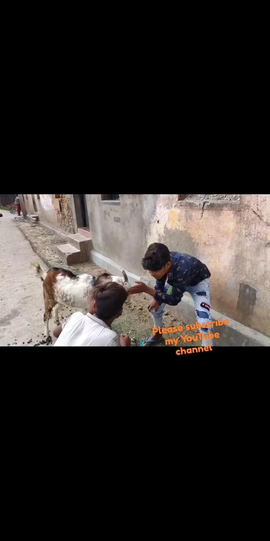 #conedyvideos #roposostar