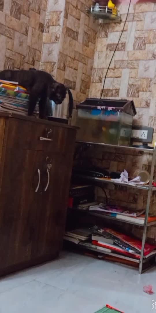 #cat  very bad cat 😠😠😠😠😠😠😠😠😠😠😠🧐🧐🧐🧐🧐🧐😵😵😵😵