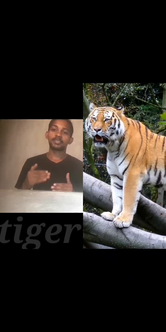 #india  #RealFacts  interesting facts about Tiger.