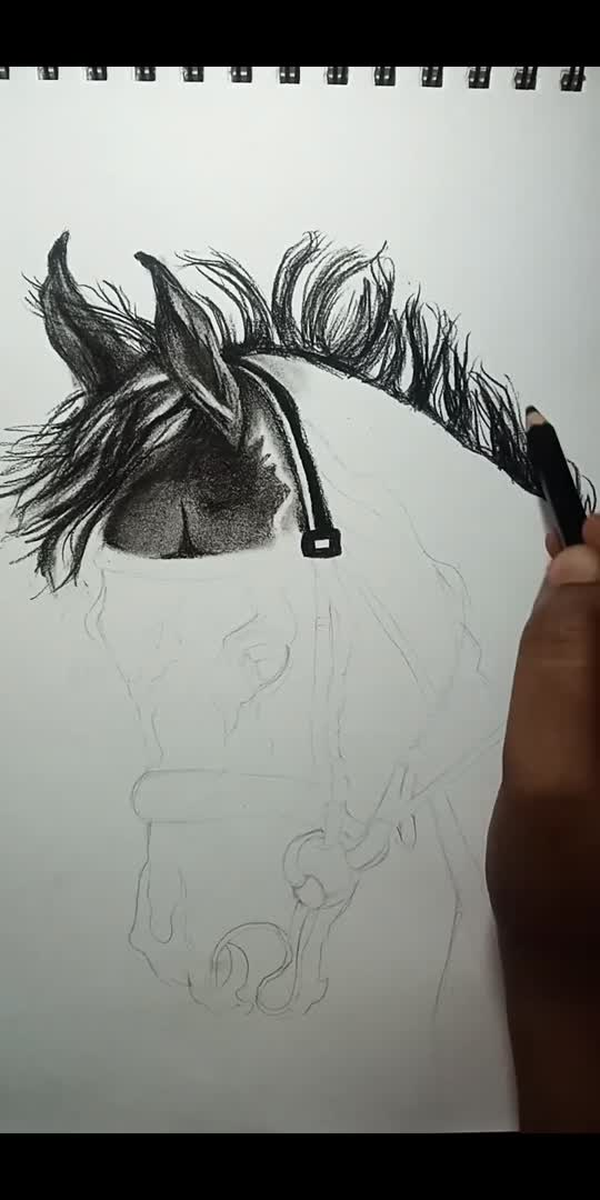 Charcoal sketch of a 🐴  #roposostarchannel