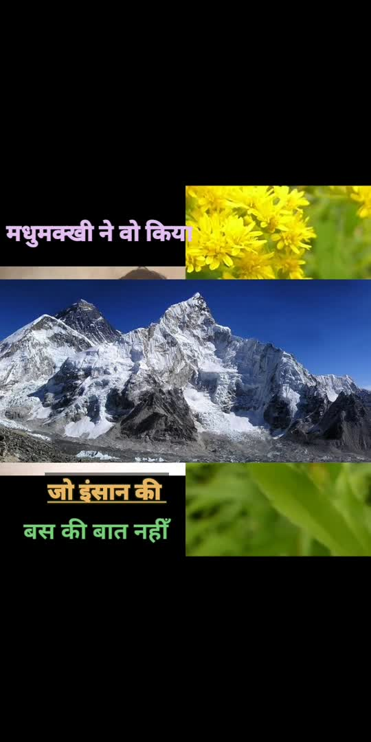 real interesting facts about bees,मधुमक्खी के बारे मे कुछ बाती