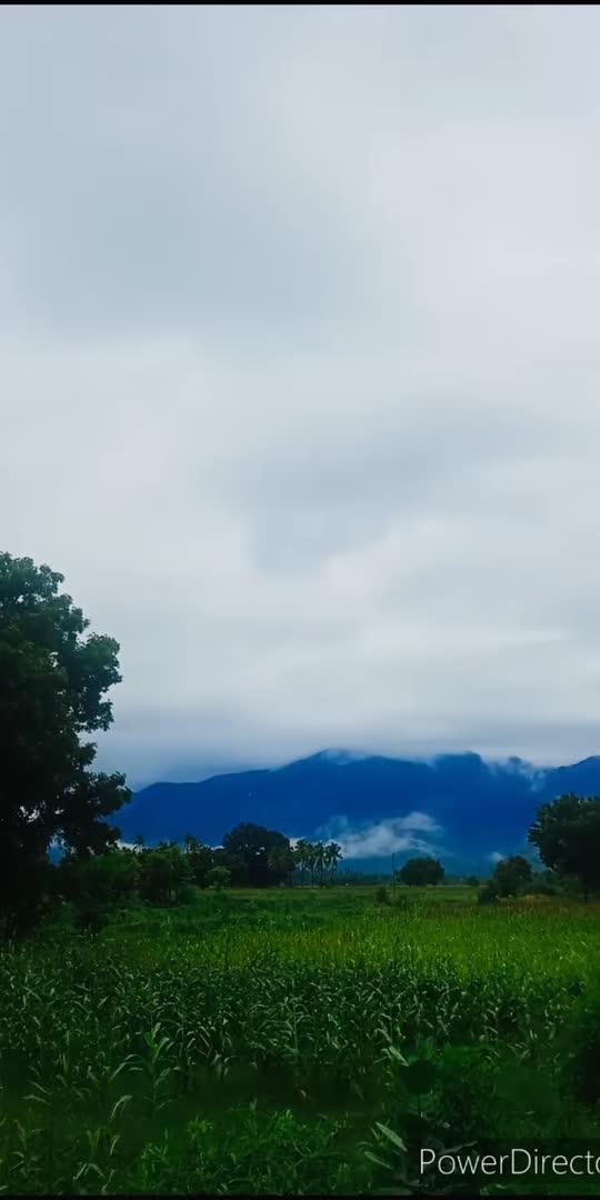 #morning_vibes #mygarden