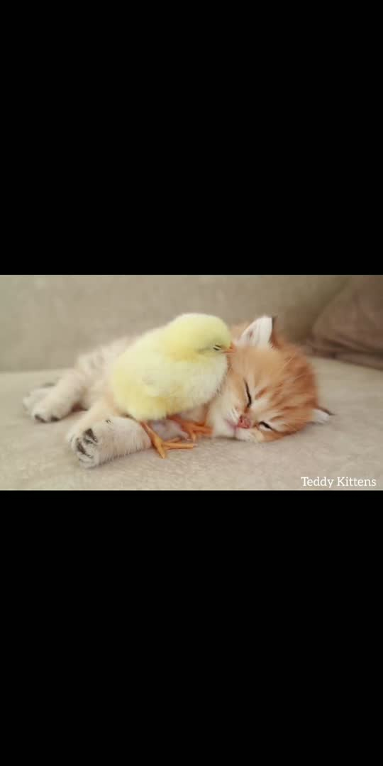 meow meow punai...... #viralvideo #virul #trendingvideo #todaytrending #catslover #petslover #cat #super #wow-nice-view #wowvideo