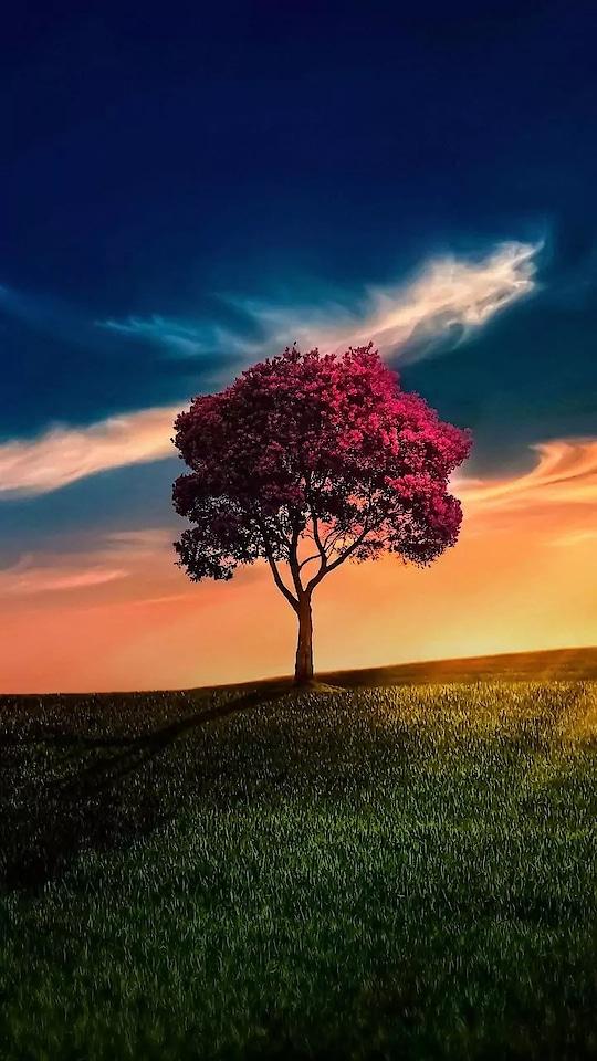 nature#nature